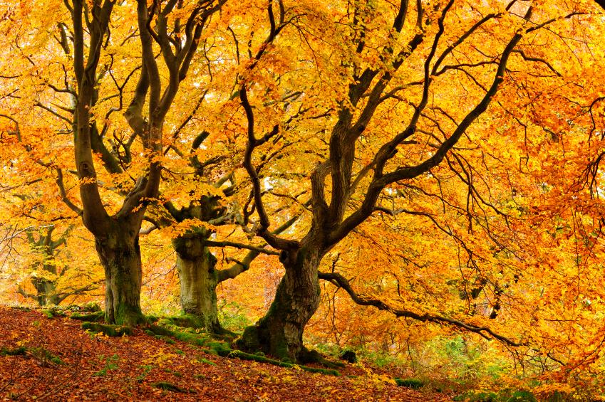精致的芳香疗法和秋季精油